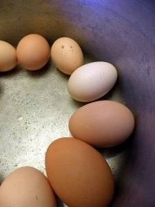 Look no farther for my blogging: all my eggs are in this basket.