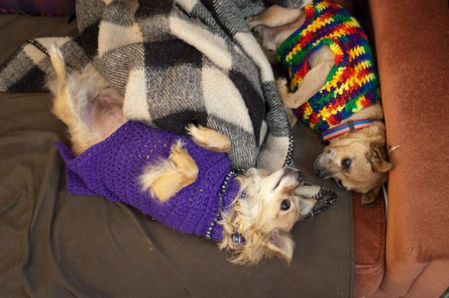 This is Sierra and Max, wearing Abby's homemade dog sweaters, just seconds after I got up from our nap this afternoon.