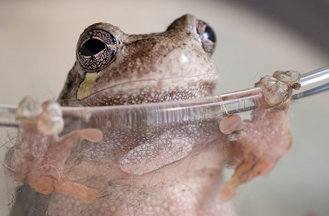 What could make my morning more comical than a frog on the edge of a glass in our kitchen sink?