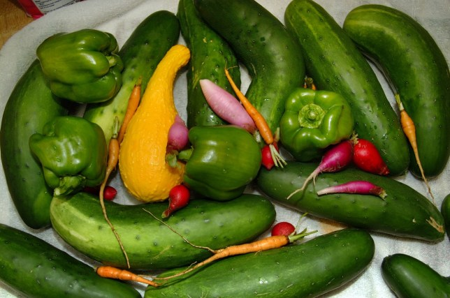 Fruits and vegetables like these all summer are the payoff for the very hard work and devotion of spring gardening.