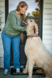 Abby poses with Hawken the Irish Wolfhound last night. As you can see, he is a very large dog.