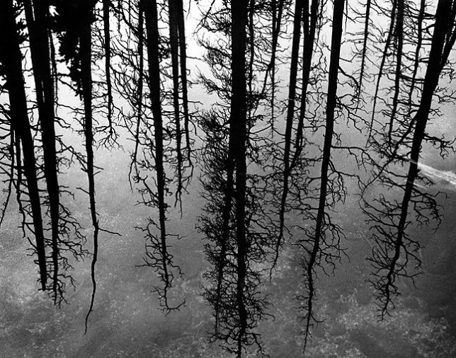 The forest is reflected in the waters of Lincoln Lake.
