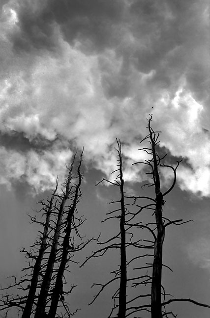 Reach For Clouds >> Burned Pines Reach For Clouds On The Lincoln Lake Trail Mount Evans