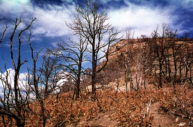 Wildfire damage along the Knife Edge formation, Mesa Verde