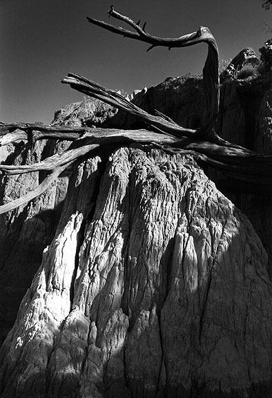 "Dead tree and ""Spanish Skirts"" erosion."