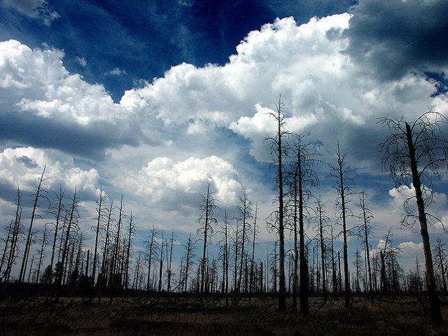 Some areas of Arizona's Kaibab National Forest were eerily bleak from fire damage.