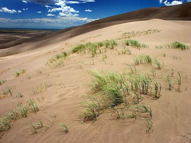 Areas of shallow grasses cling to sand at Great Sand Dunes.