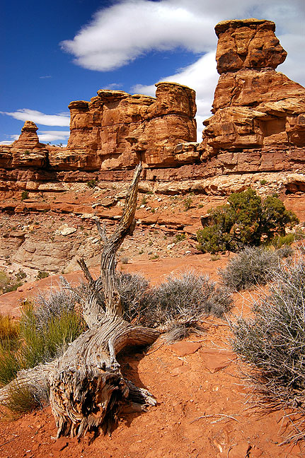 Spires rise near the Confluence trail head at Canyonlands.