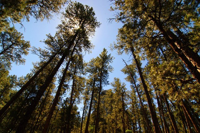 The Red Beds trail takes hikers into this tall forest.