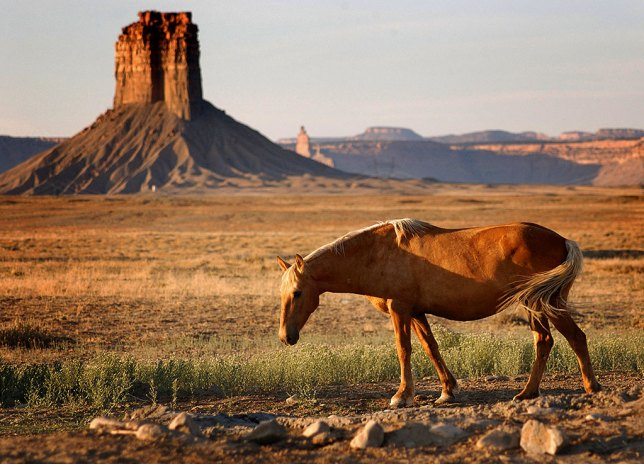 A horse grazes near Chimney Rock in southwestern Colorado at Sunset.