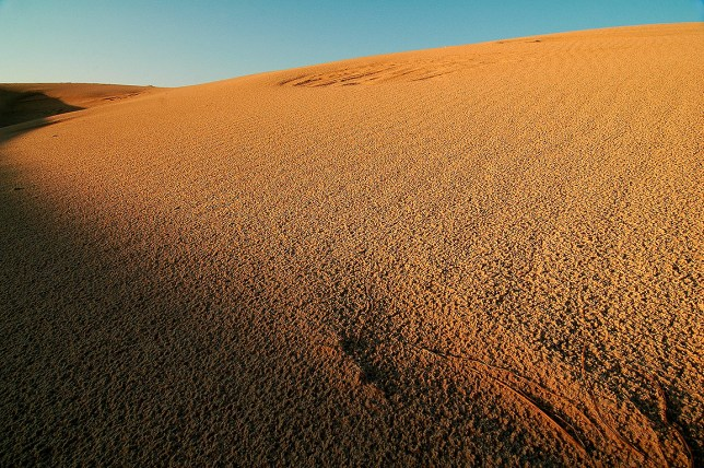 The golden hour arrives at Monahans Sandhills State Park.