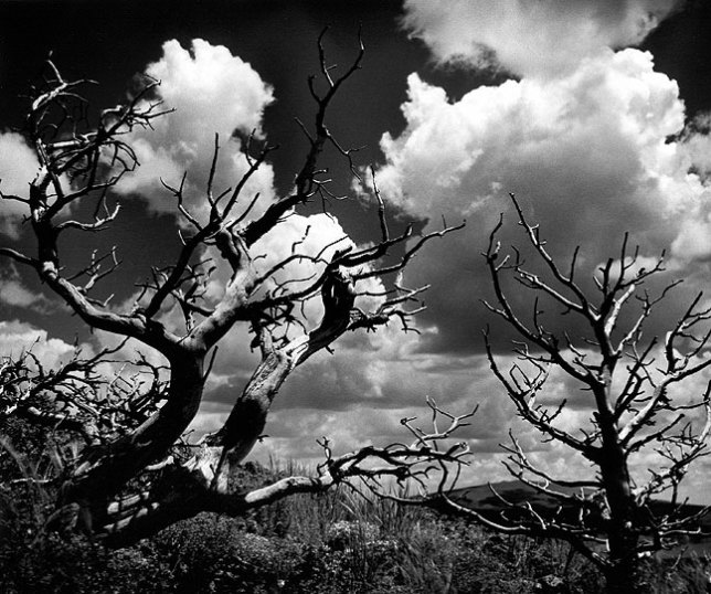 Trees and clouds, Capulin Volcano