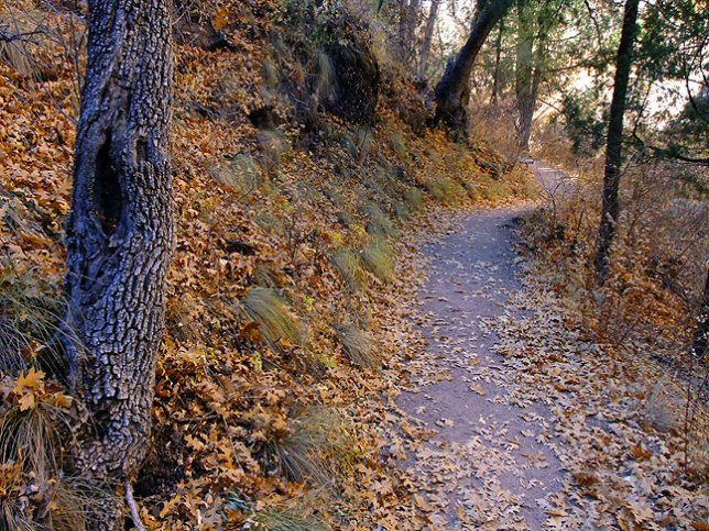 Trail, Gila Cliff Dwellings National Monument, New Mexico.