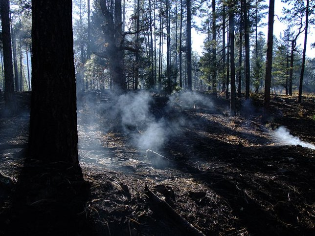 Prescribed burn in the Gila National Forest, Piños Altos Mountains, north of Silver City, New Mexico