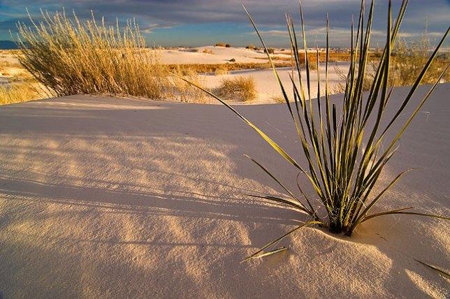 Sunset, White Sands.