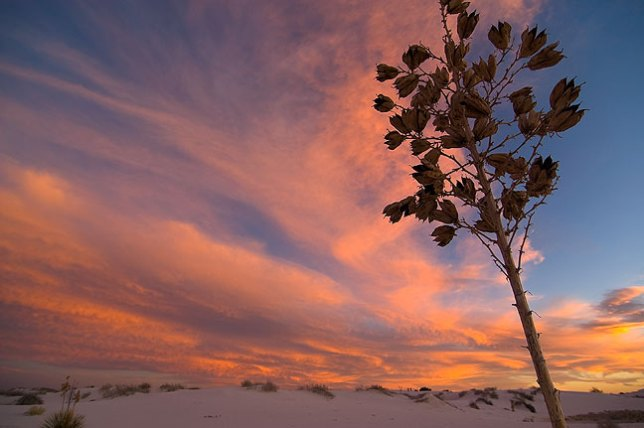 """""""Blue hour"""" light at White Sands National Monument, New Mexico"""