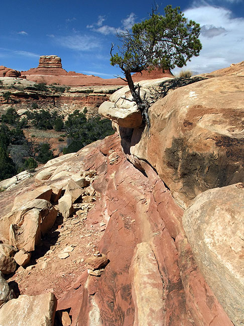 "Another example of the ""primitive"" nature of the hiking at Canyonlands, the trail serpentines down this slickrock slope along ledges that are barely as wide as a boot sole."