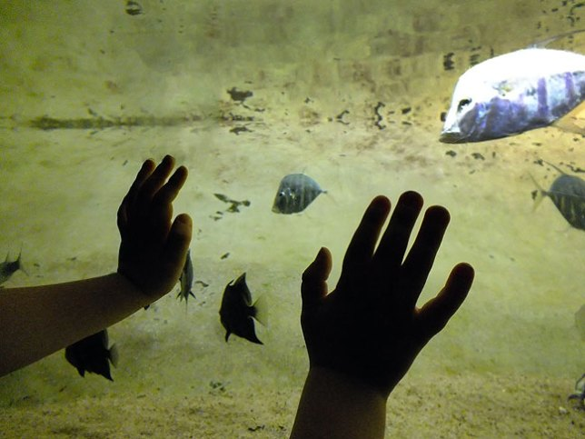 Paul presses his hands on the glass as he watches fish at the National Aquarium.