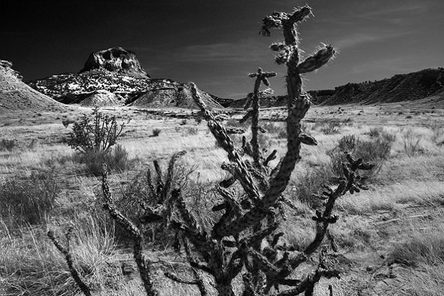 Cholla creates a natural compositional element for this image of Cabezon Peak.