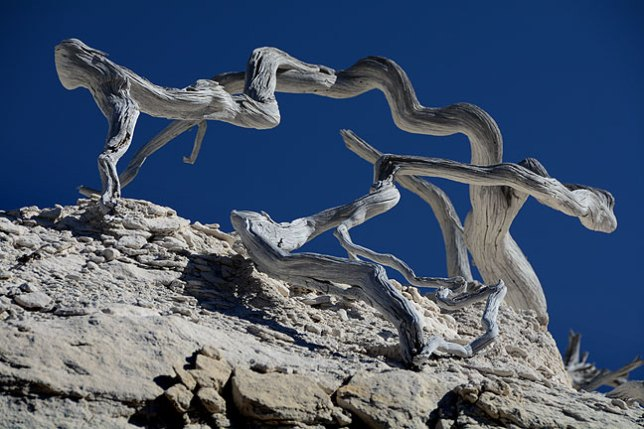 A long-dead tree sits on a bleached cliff face above the wash in which we hiked at Penistaja.