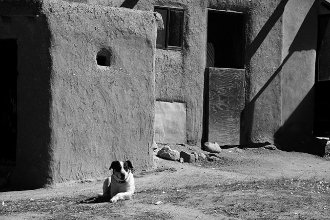 Dogs like this one were a common sight throughout Taos Pueblo.