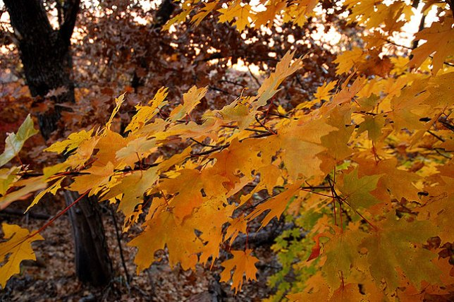 Foliage, Elk Mountain Trail