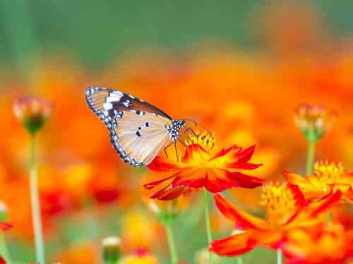 """This happens in a way that has a """"butterfly effect"""" - by paying it forward."""