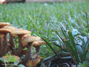 Mushrooms in the grass.