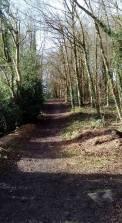 November Woods 2