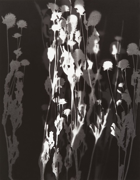Richard Burd Photography Photograms Negative Illuminations