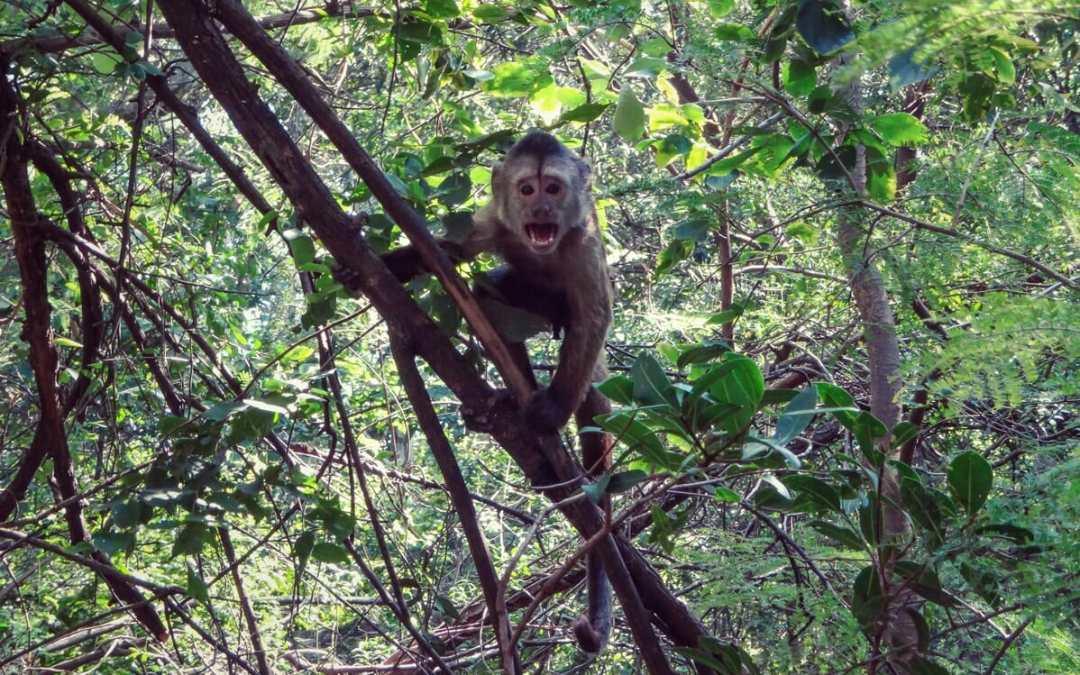 Monkey Sanctuary – Monkey with attitude