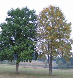 Contrast TreesSized