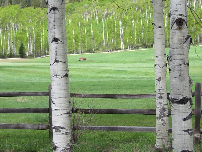 I took this snapshot of a meadow being mowed near Aspen, Colorado, in June 2013, from the window of my sister's car.