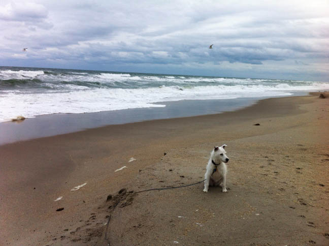 [Belle at the beach, January 2014.]