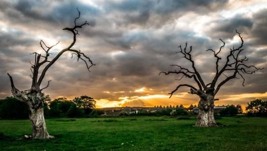 dead-oak-sunset_17984726709_o