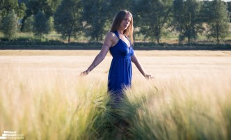 wheat-field_28275155607_o