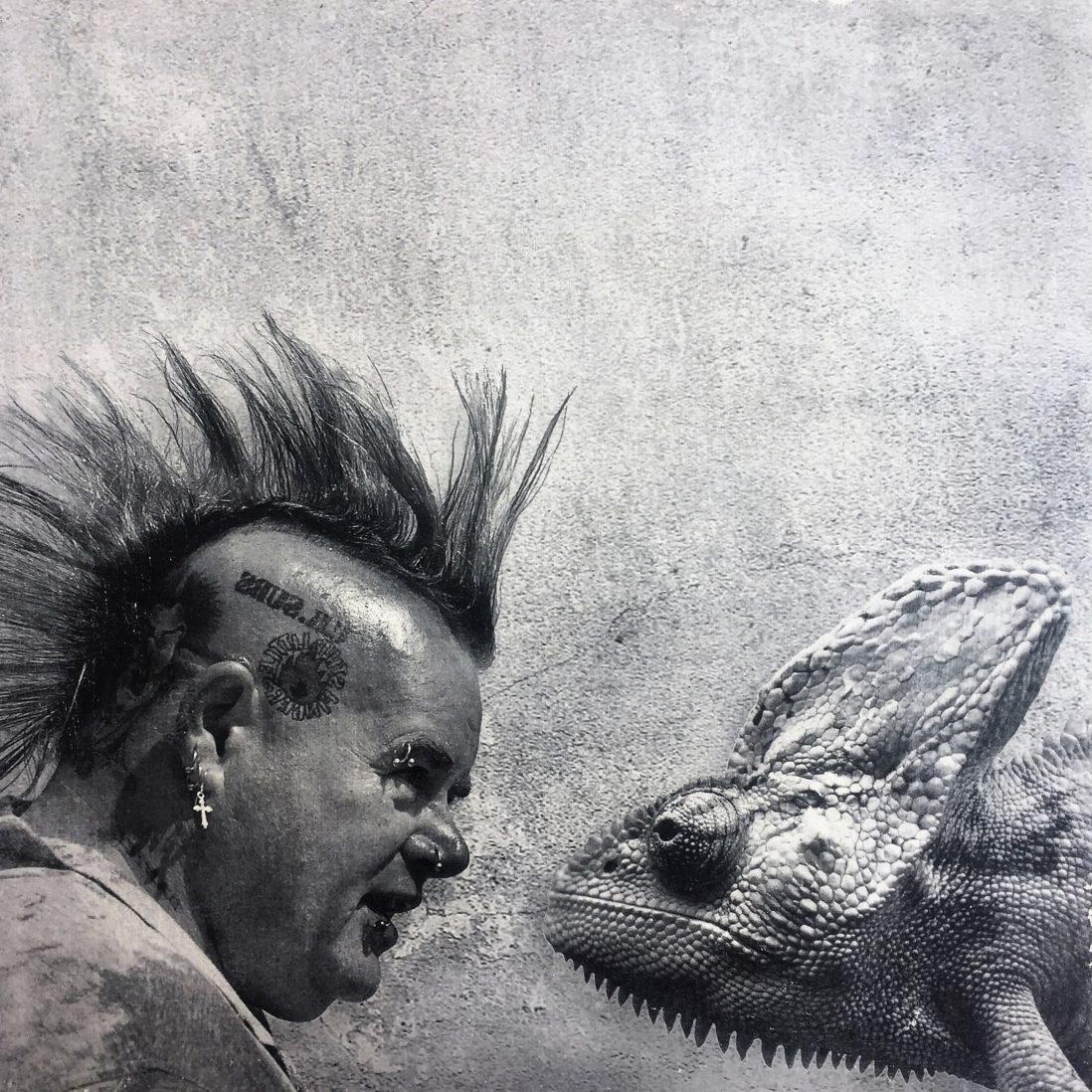 Lizard punk