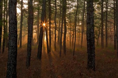 NJ Pinelands Landscape