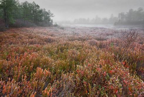 NJ Pinelands Photography