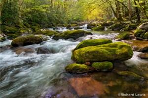 14_tremont-creek-warped-web-1024x683