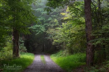 Quiet Forest Road Delaware Water Gap by Richard Lewis