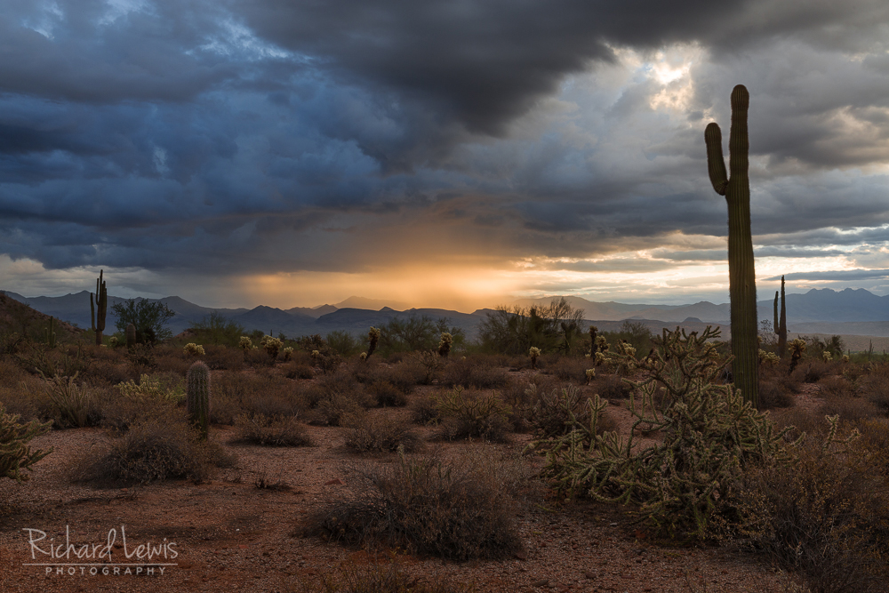 Rainy Desert Morning Light In Arizona