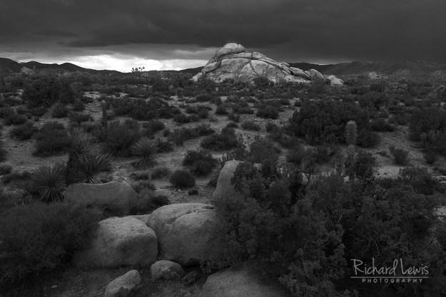 Desert Storm in Joshua Tree by Richard Lewis