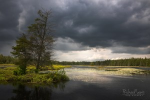 Storm Light In The Pine Barrens New Jersey