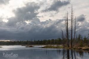 Five Cedars Brave The Storm Richard Lewis Pinelands