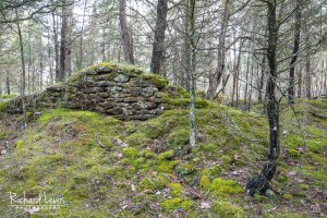 Pine Barrens Ruins by Richard Lewis