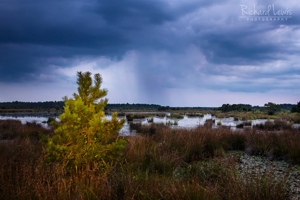 Last Light In The Pinelands With Distant Rain