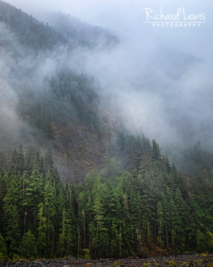 Fog On The Nisqually River Mt Rainier