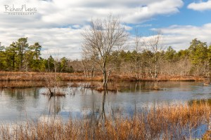 Afternoon Along The Mullica In The Pine Barrens