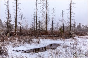 Snow Fall On The Mullica In The Pine Barrens
